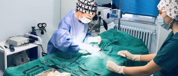 Cerrahi Operasyonlar, Kısırlaştırma,Kemik Ameliyatları 7/24 Acil Veteriner