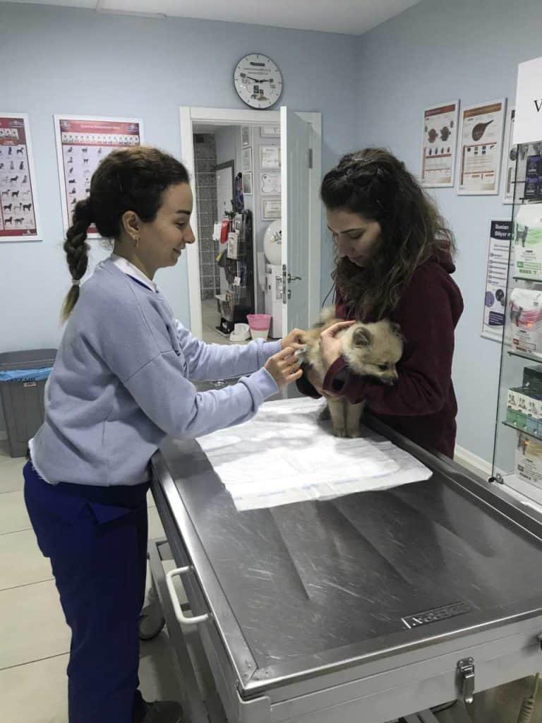 Aşı, Aşılama, Aşı takibi, Tedavi 7/24 acil veteriner